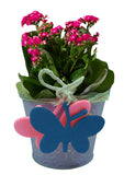 "5"" Metal Planter with Butterfly Accents-Wald Imports"