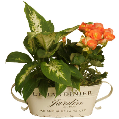 "Double 4"" Distressed French Metal Planter-Wald Imports"