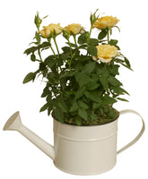 "5"" Pearl White Metal Watering Can-Wald Imports"