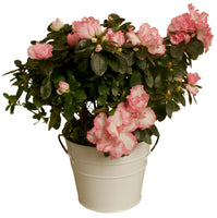 "7"" Pearl White Metal Planter-Wald Imports"