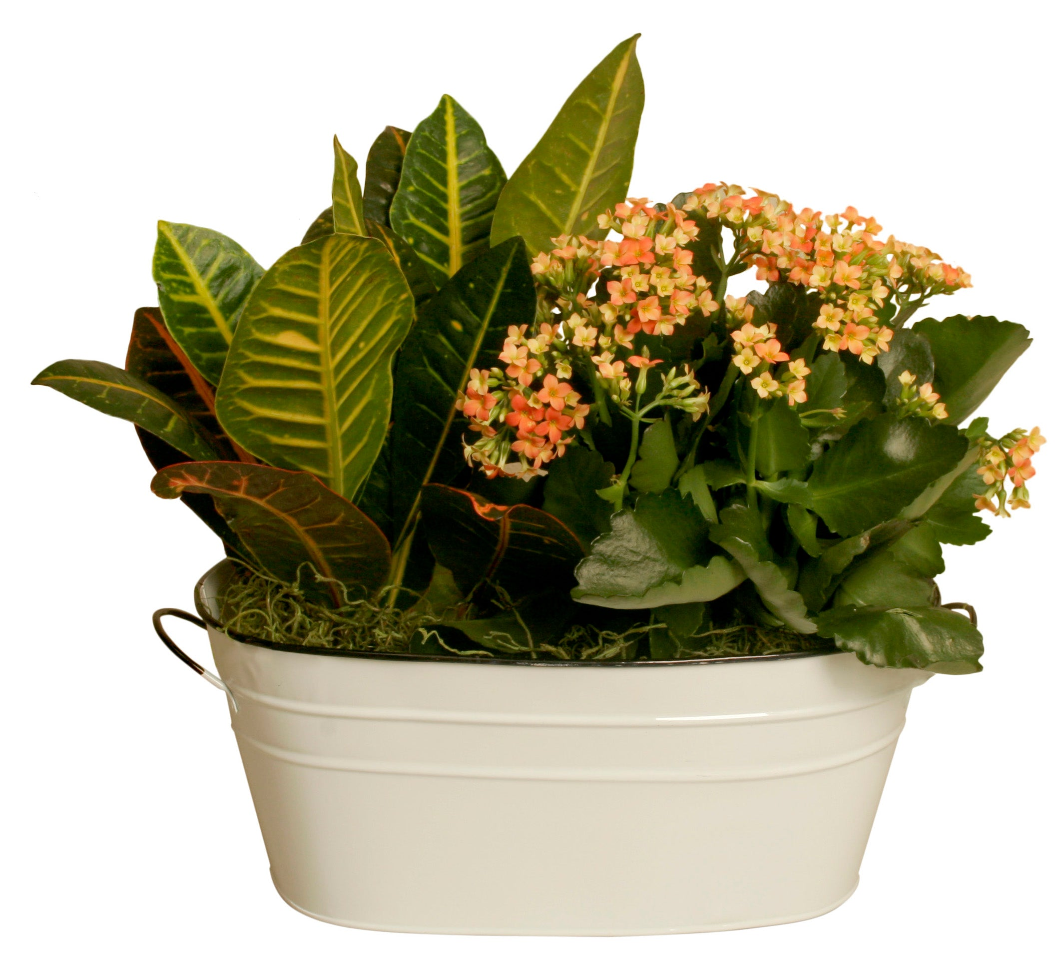 "Double 6"" Pearl White Metal Planter-Wald Imports"
