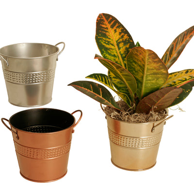 "5"" Assorted Metal Planters-Wald Imports"