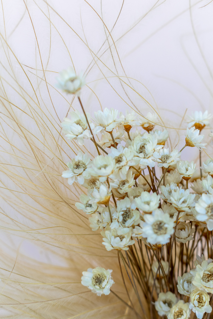 Mini Star Flowers - LUXE B PAMPAS GRASS