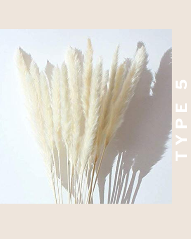 PAMPAS GRASS (25 stems)- Type 5 White - LUXE B OFFICIAL
