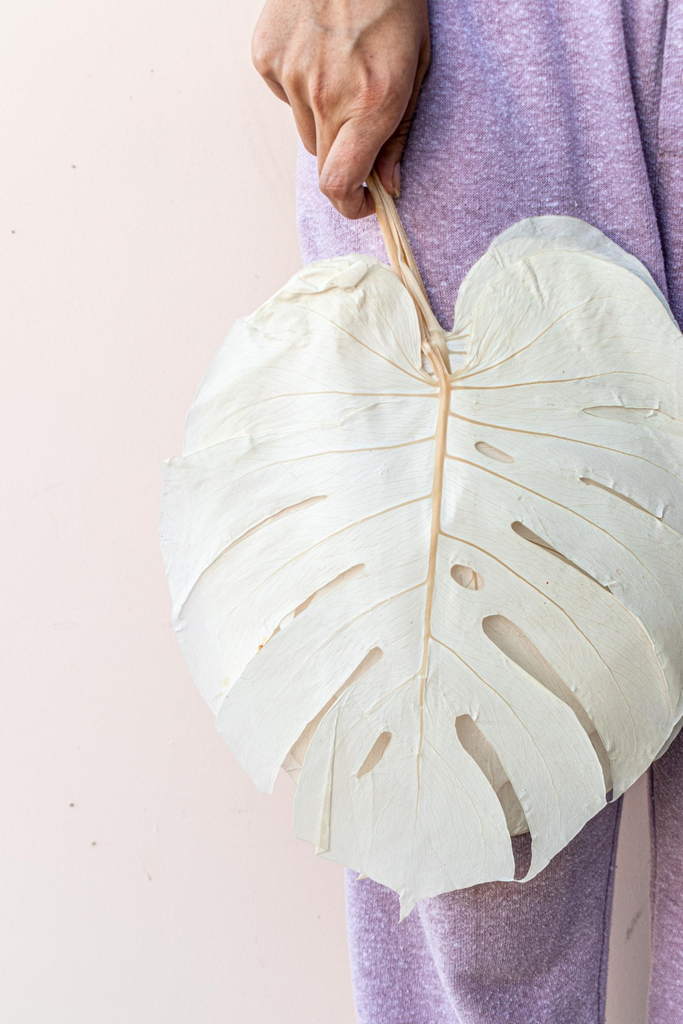 Preserved Bleached White Monstera Leaves