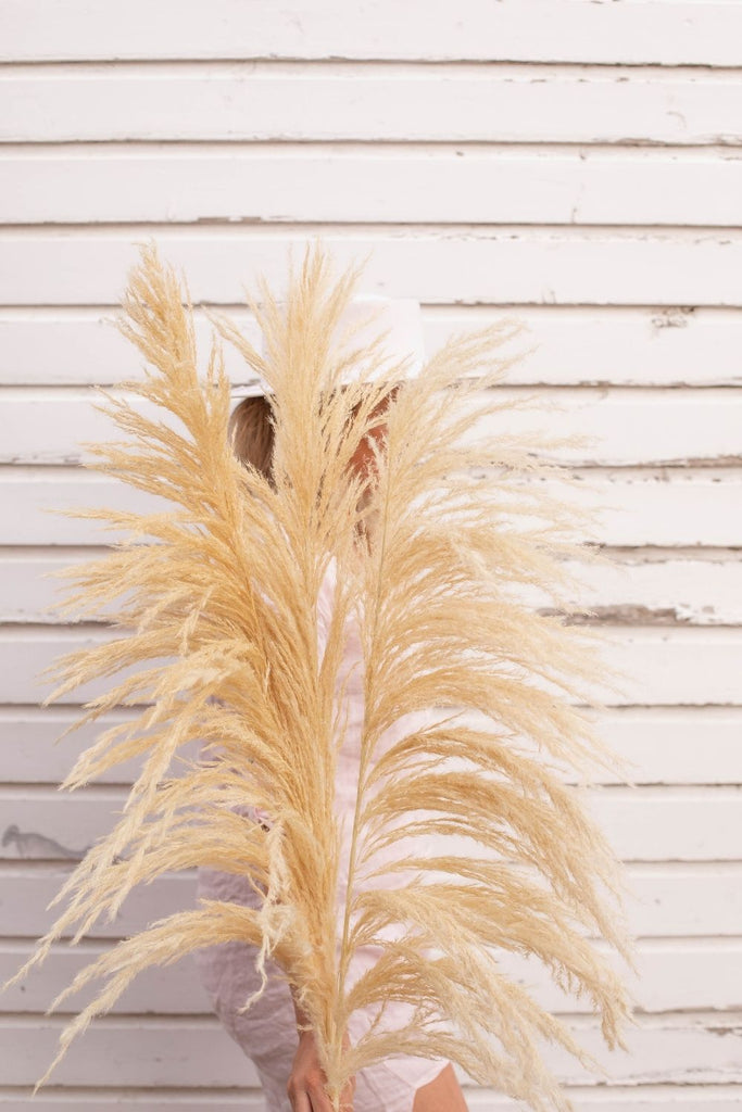New Limited Edition Type 8 Bleached Golden White PAMPAS GRASS - LUXE B Pampas Grass