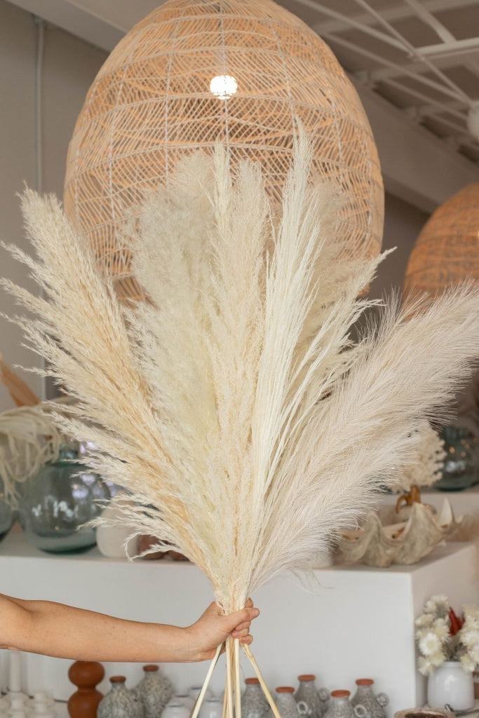 Luxe B Promo Pampas Pack Limited Edition - LUXE B PAMPAS GRASS