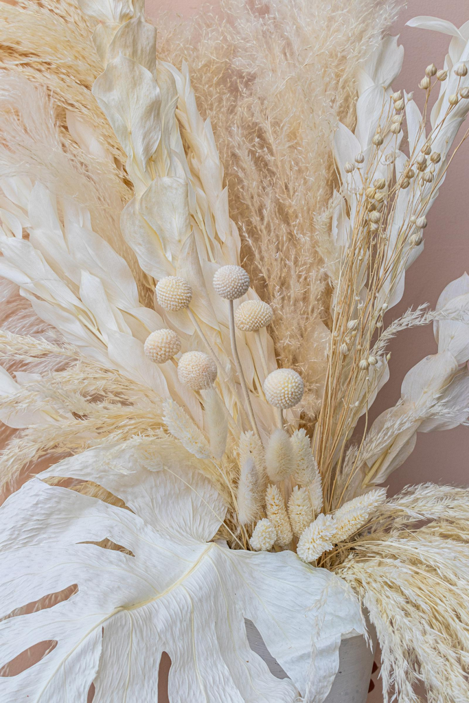 Preserved Bleached White Monstera Leaves - LUXE B PAMPAS GRASS