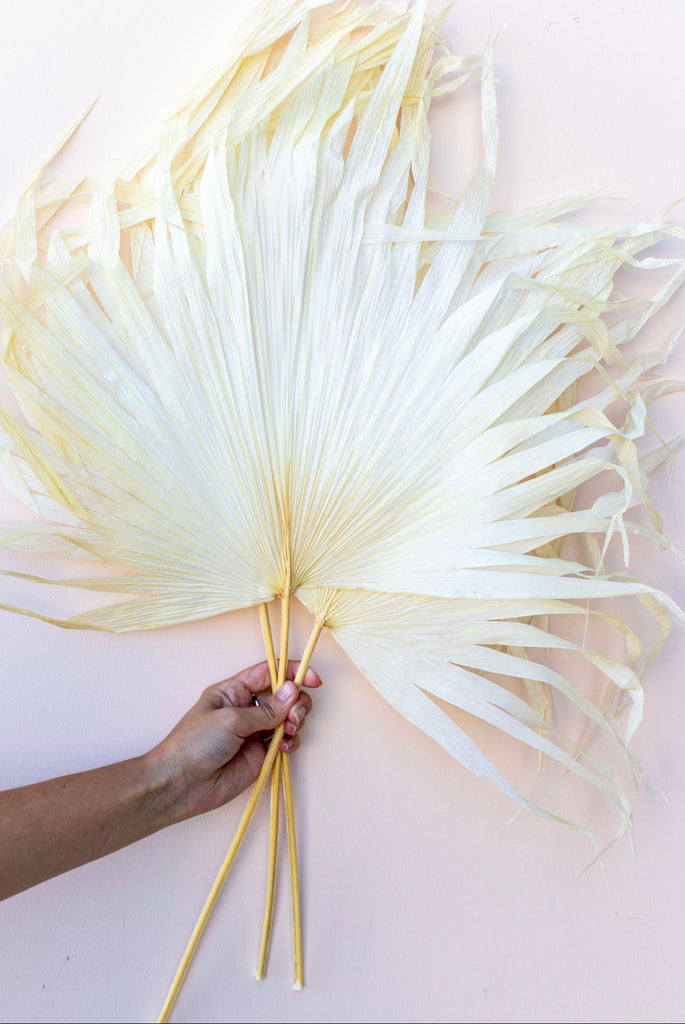 Preserved Palm Leaves Bleach White (2) - LUXE B PAMPAS GRASS