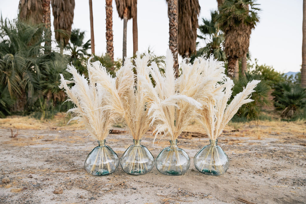 PAMPAS GRASS - Type 2 Bleached White - LUXE B OFFICIAL
