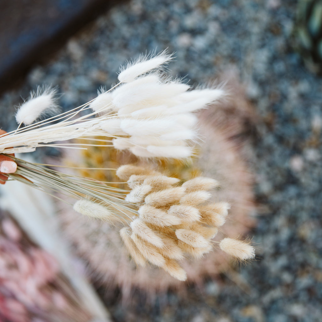 BUNNY TAILS off-white 60 stems Pampas Grass - LUXE B OFFICIAL