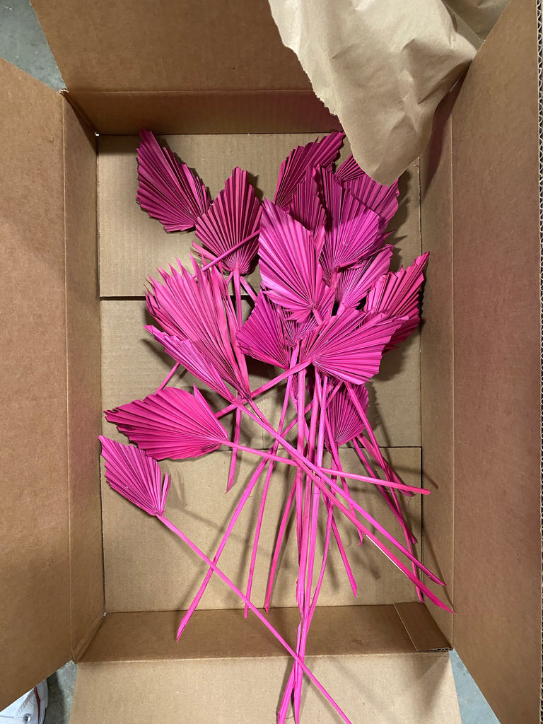 Fuchsia spears clearance - LUXE B Pampas Grass