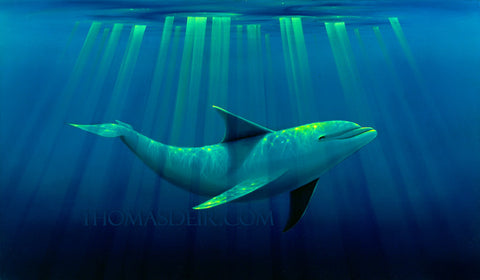 Basking Dolphin Painting by Hawaii Artist Thomas Deir