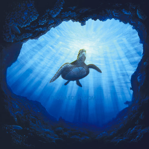Kauai Turtle Cave Giclee Prints by Hawaii Artist