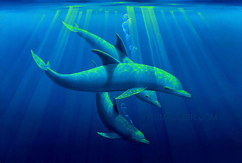 Trio of Tranquility dolphin painting by Hawaii artist Thomas Deir