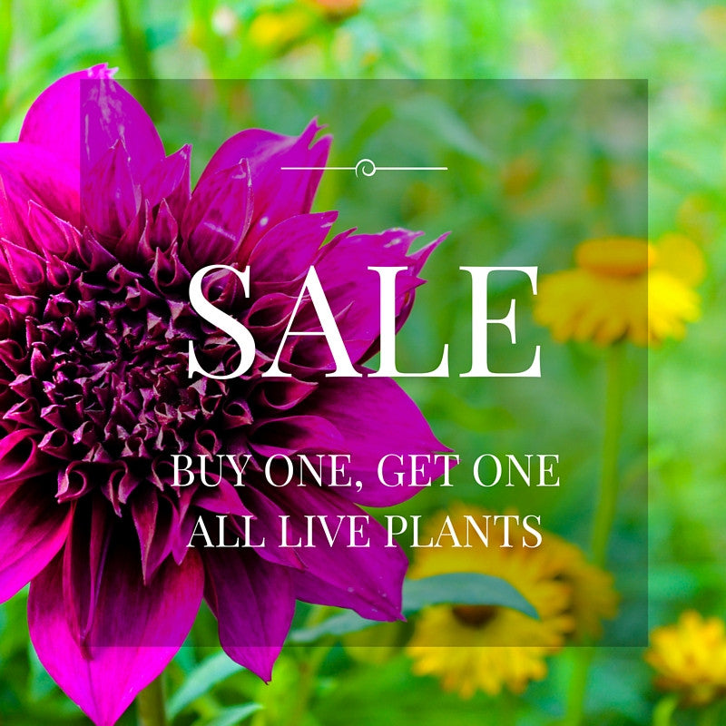 BUY ONE, GET ONE All Live Plants at Moss