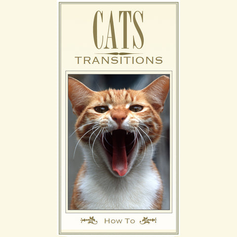 Cat Transitions Brochure