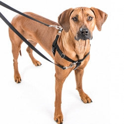 Freedom No Pull Harness & Euro Leash Combo