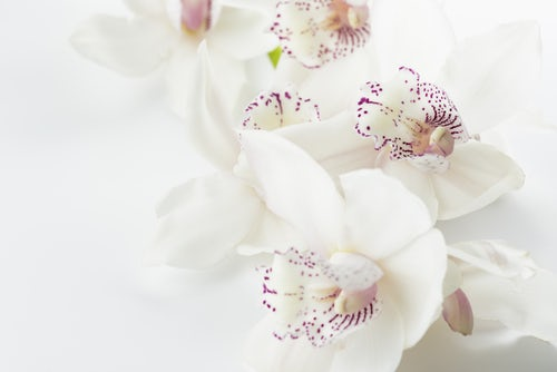 5 Orchids and Their Meanings