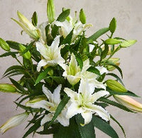 Lilies - for Flower Delivery on Category ||Basket Basket