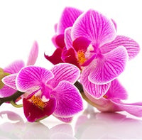Orchids - for Midnight Flower Delivery on Category || Red ColorRed Color