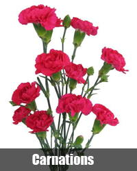 Best Online Flower Delivery In Bangal