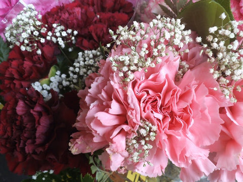 purple and pink carnations