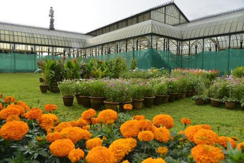 glasshouse-lalbagh