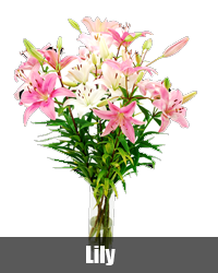 best online flower delivery in bangalore send flowers to bangalore