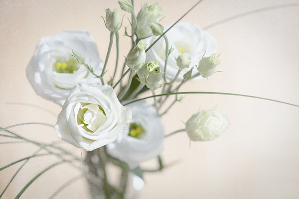 Lisianthus womens day flowers