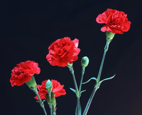 online carnations flower delivery in Pune