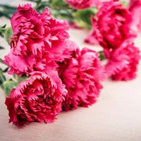 Carnation - for Online Flower Delivery on Category || Red ColorRed Color