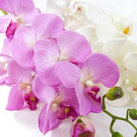 Orchids - for Midnight Flower Delivery in Bangalore Thippasandra