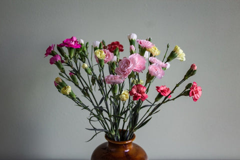 spray carnations in pune