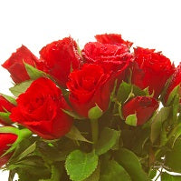 red rose bouquet - for Midnight Flower Delivery in Subcategory Flowers Roses White Rose
