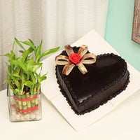 Plant Combos - Send Flowers for Category | Combos |and Cakes and Cakes
