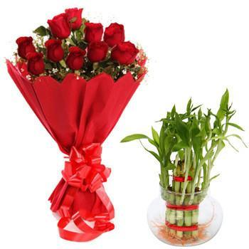 Goodluck Combo - from Best Flower Delivery in India