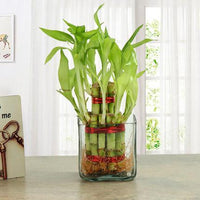 Buy Plants Online - for Flower Delivery in Allahabad