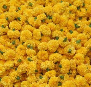 Loose Marigold Flowers - for Midnight Flower Delivery in India