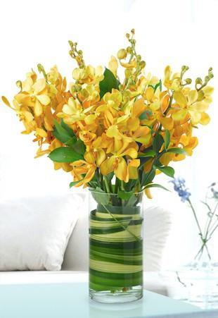 Yellow Orchids - from Best Flower Delivery in Category Flowers Orchids