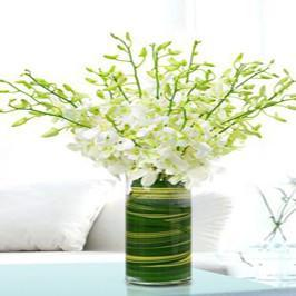 White Orchids - for Flower Delivery in Category Flowers Orchids