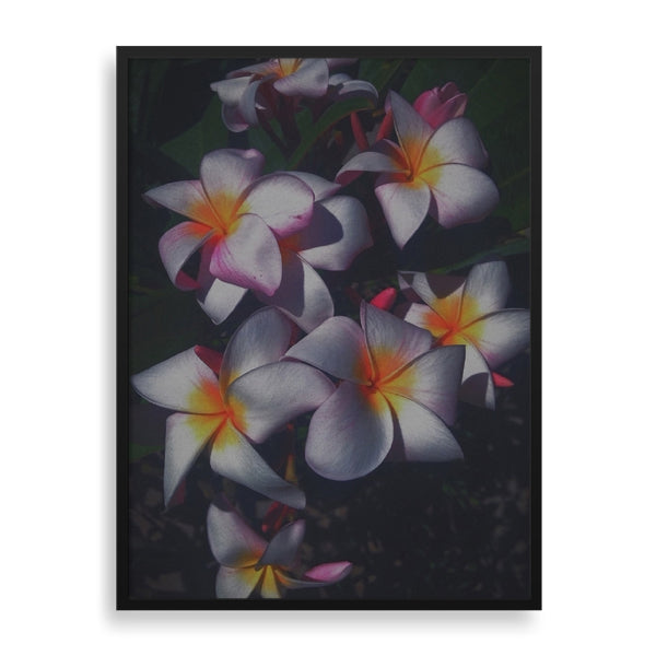 shadows in bloom framed print by african-american artist the reclusive blogger
