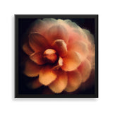 peach petals framed print by african-american artist the reclusive blogger