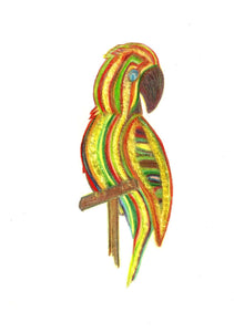Parrot of Caribbean Original Tri-Color Pencil Drawing