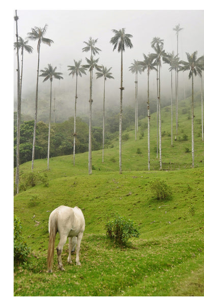 Valle de Cocora - Salento, Colombia