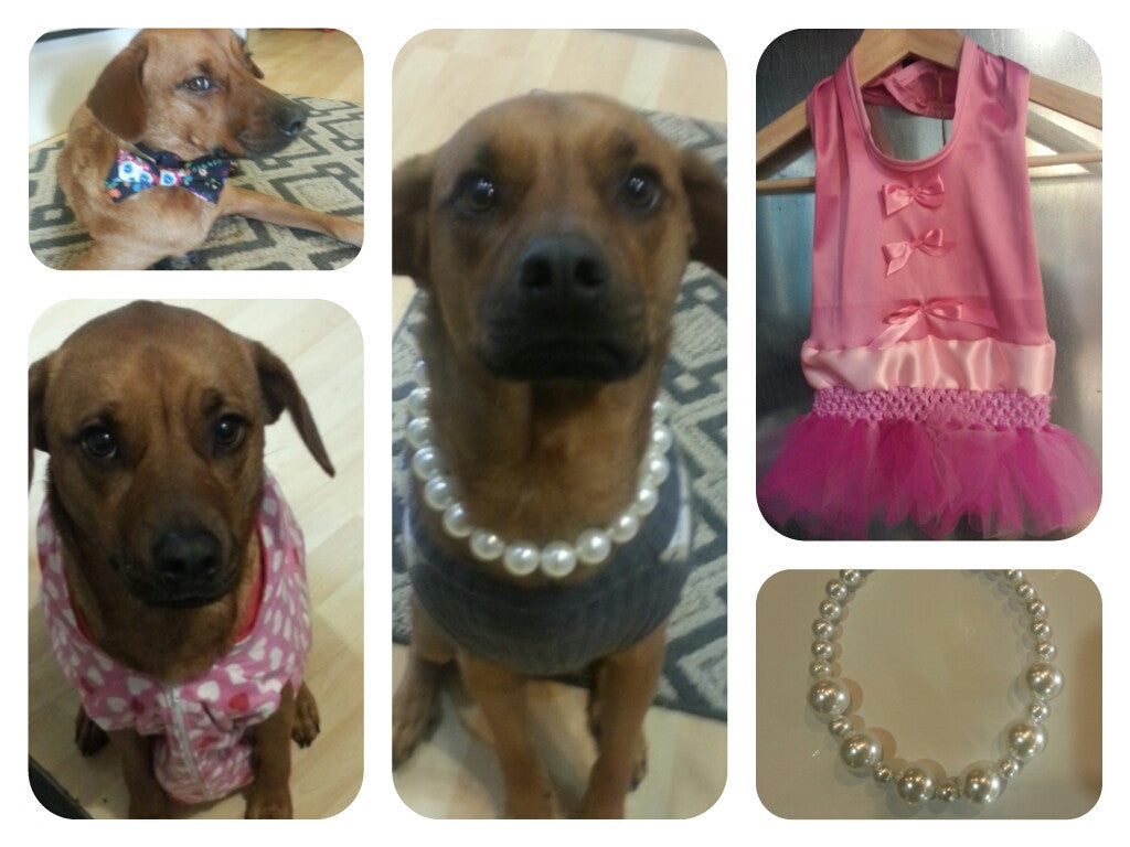 Pooch Couture At Stitched