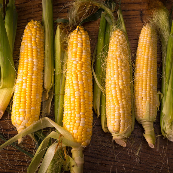 "Fresh Corn 24"" Square Banner for Bulletin Boards and Walls"