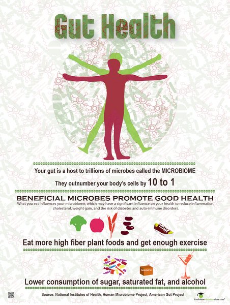 "Gut Health Poster - Microbiome Poster 18"" x 24"" Laminated"