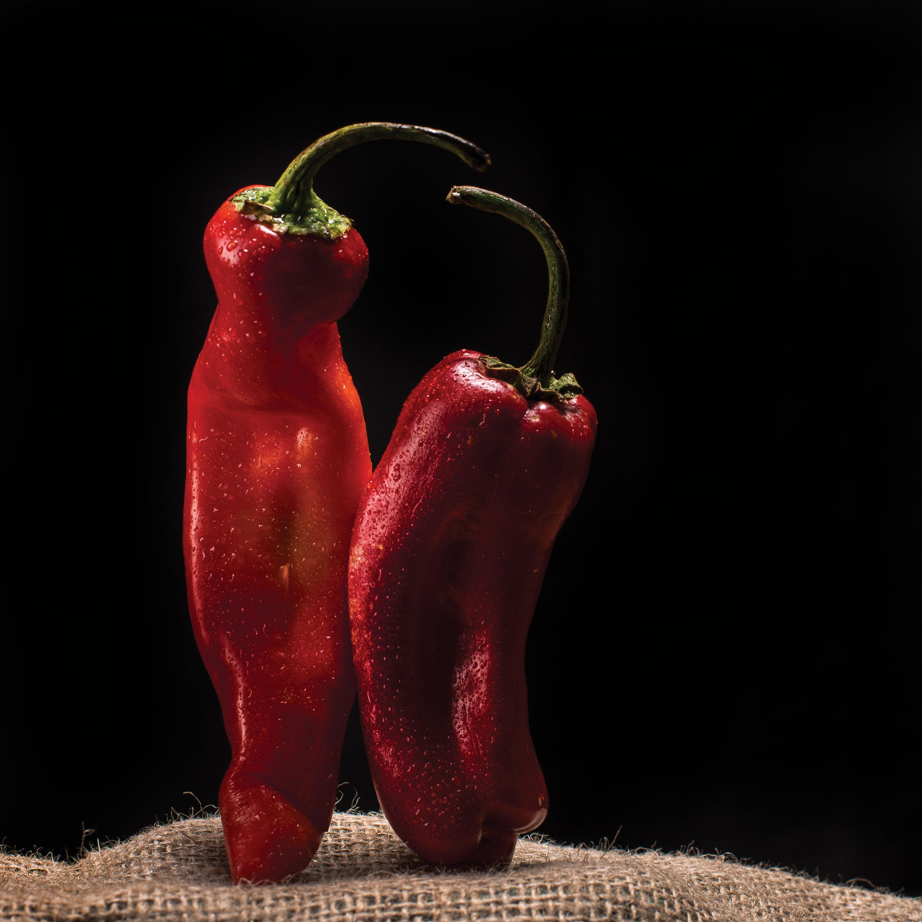 "Art Print 14"" x 14"" Food Photograph ""Dancing Chillies"" on Canvas Foam Board Ready to Hang - Nutrition Education Store"