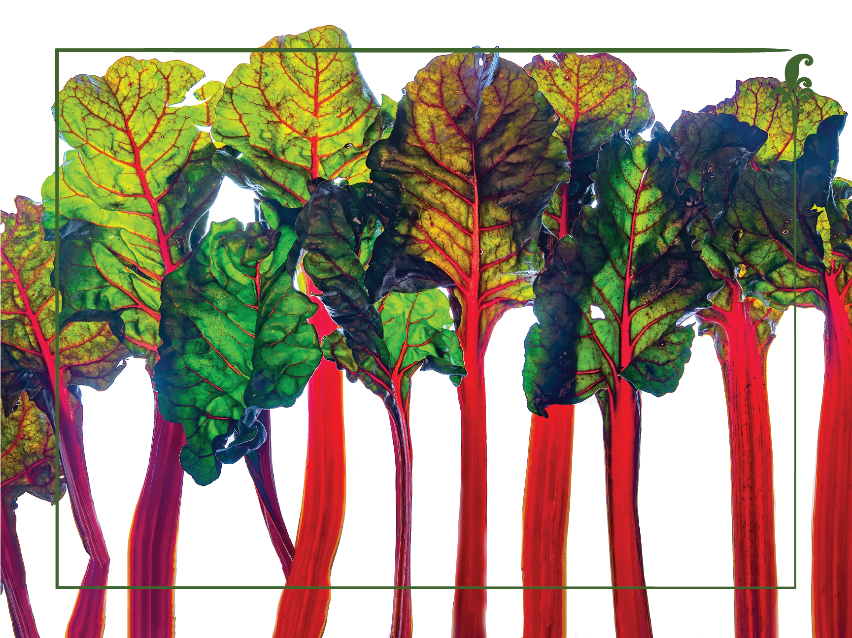 "Rainbow Chard 18"" x 24"" Vinyl Wall Decal Poster - Local Foods - Farmer's Market - Vegetables - Nutrition Education Store"